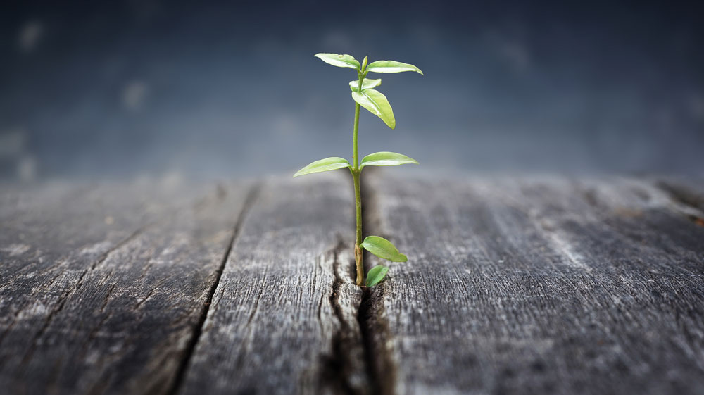 You can grow!